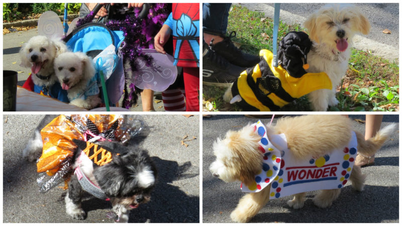 nickis central west end guide cwe pets events sightings food and drink for children shop - Halloween Events Maryland