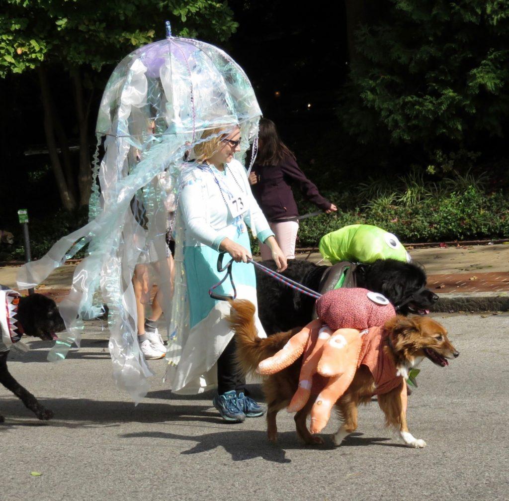 Nicki's Central West End Guide Art & Architecture CWE Pets  St. Louis Central West End Pet Parade