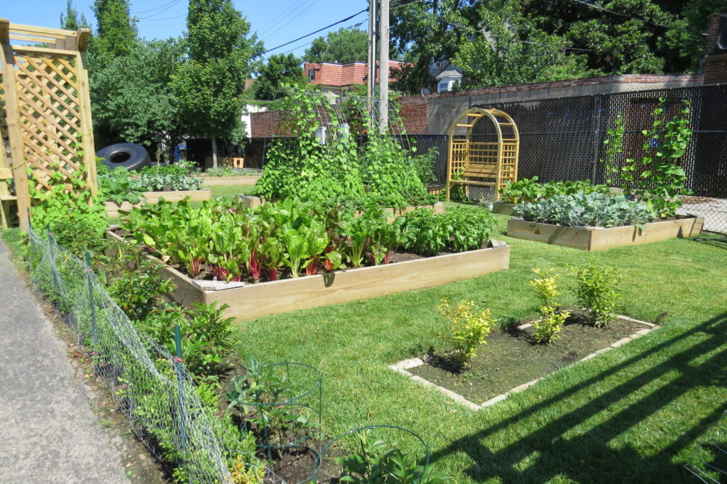 Nicki's Central West End Guide Education Food and Drink For kids Urban Gardens  New City School Matt Lebon Maggie Pearson Julie Lazaroff CWE Farm Arthur Culbert Alexis Wright